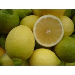 Bio Zitronen Primofiori 5kg